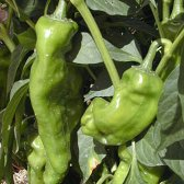 Jarales Hot Peppers HP367-10_Base