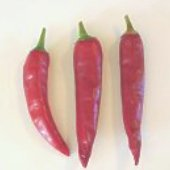 Masuto Hot Peppers HP1023-20