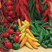 Mexican Mix Hot Peppers HP1971-20_Base