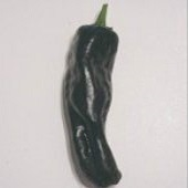 Negro Hot Peppers HP1086-10