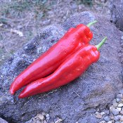New Mexico 64L Hot Peppers HP1802-20_Base