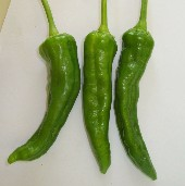 NuMex Barker's Hot Peppers HP306-20_Base