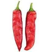 NuMex R Naky Hot Peppers HP168-20_Base