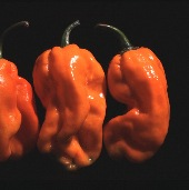 NuMex Suave Hot Peppers (Orange) HP1816-10