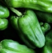Padron Hot Peppers HP2224-10_Base