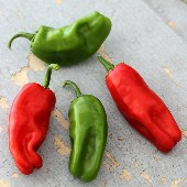 Pimiento de Padron Hot Peppers HP1157-20_Base