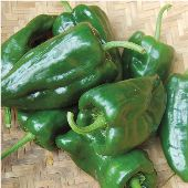 Poblano Hot Peppers HP1563-20_Base