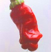 Peter Pepper Hot Peppers (Red) HP184-10_Base