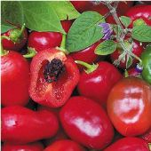 Rocoto Hot Peppers (Red) HP201-10_Base