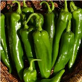 Sonora Hot Peppers HP222-10_Base