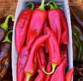 Tarahumara Chile Colorado Hot Peppers HP458-10_Base