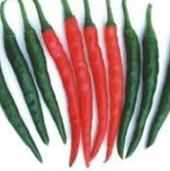 Tejaswini Hot Peppers HP238-10_Base
