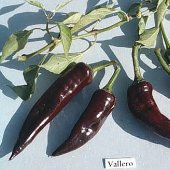 Vallero Hot Peppers HP250-20_Base