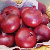 Chianti Onion ON51-100_Base