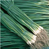 Natsuyo Bunching Onions ON53-100_Base