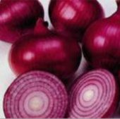 Red Creole Onions ON8-100_Base