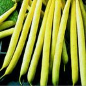 Kentucky Wonder Wax Pole Beans BN114-50_Base