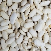 Potomac Pole Beans (White Seeds) BN115-25_Base