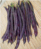 Trionfo Violetto Pole Beans BN103-25_Base