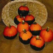 Batwing Pumpkins PM33-10_Base