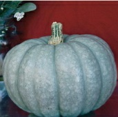 Blue Moon Pumpkins PM54-10_Base