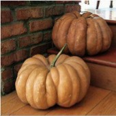 Fairytale Pumpkins PM57-10_Base