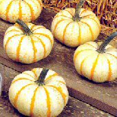 Lil Pump Ke Mon Pumpkins PM28-10_Base