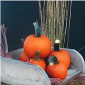 Pik A Pie Pumpkins PM59-10_Base