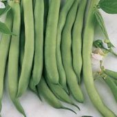 White Half Runner Pole Beans BN3-50