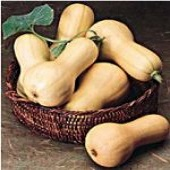 Burpee Butterbush Squash SQ4-10_Base