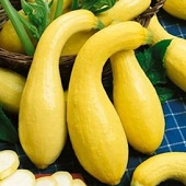 Early Golden Summer Crookneck Squash SQ33-20