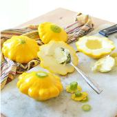 Scallop Yellow Squash SQ17-20_Base