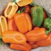 Yummy Orange Sweet Peppers SP370-5