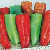 Aruba Sweet Peppers SP15-20_Base