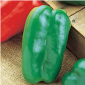 Big Bertha Sweet Peppers SP9-20_Base