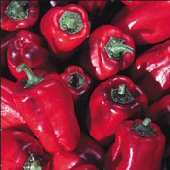 Buran Sweet Peppers SP121-20_Base
