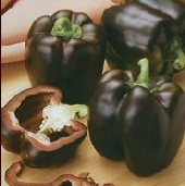 Chocolate Bell Sweet Peppers SP233-20