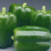 Commandant Sweet Peppers SP246-10