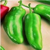 Corno Verde Sweet Peppers SP105-20_Base