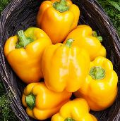 Golden California Wonder Sweet Peppers SP242-20_Base