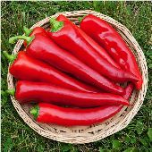 Corno di Toro Sweet Peppers (Red) SP18-20_Base