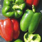 Early Niagara Giant Sweet Peppers SP87-20_Base