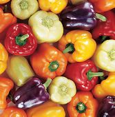 European Mix Sweet Peppers SP237-20_Base