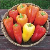 Feherozon Sweet Peppers SP204-10_Base