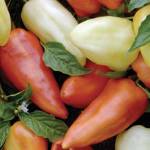 Flexum Sweet Peppers SP333-10