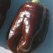 Georgescu Chocolate Sweet Peppers SP82-20