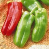 Giant Marconi Sweet Peppers SP96-10