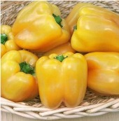 Golden Summer Sweet Peppers SP31-10_Base