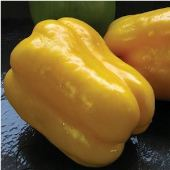 Cal Wonder Sweet Peppers (Golden) SP244-20_Base