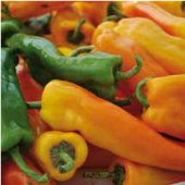 Golden Treasure Sweet Peppers SP307-10